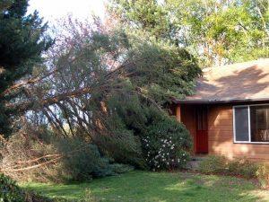 Fallen tree on a home